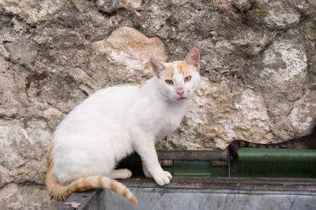scavenge: Female Alley Cat scavenging in a rubbish bin