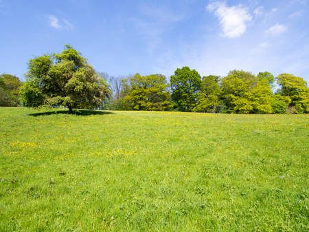 crab apple tree: Crabapple tree in a field with other trees Stock Photo