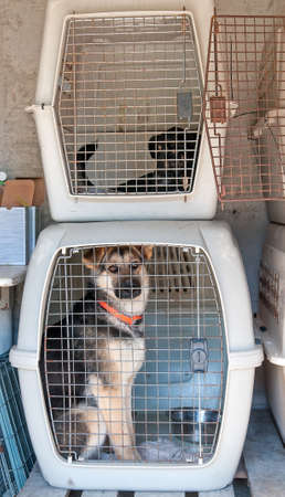 cramped: Captured stray dog in a cage