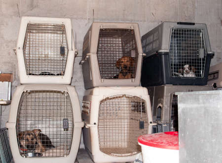 cramped: Captured stray dogs in cages