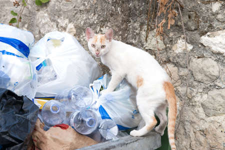 scavenge: Young alley cat searching through some rubbish