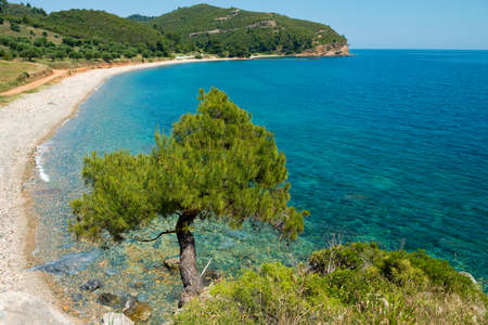 lone pine: Lone Pine Tree on a cliff overlooking a quiet bay