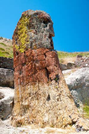 petrified: Petrified Tree by Roy Pedersen.A Petrified Tree on the Island of Lesvos,Greece. Stock Photo