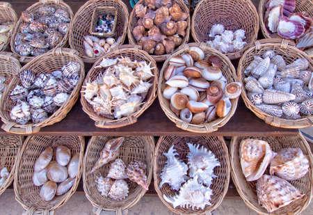 exploited: Sea shells for sale in a souvenir shop