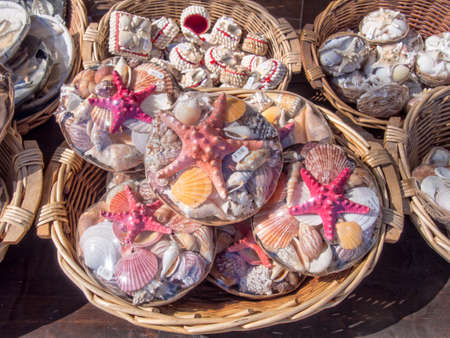 Packs of starfish and sea shells for sale