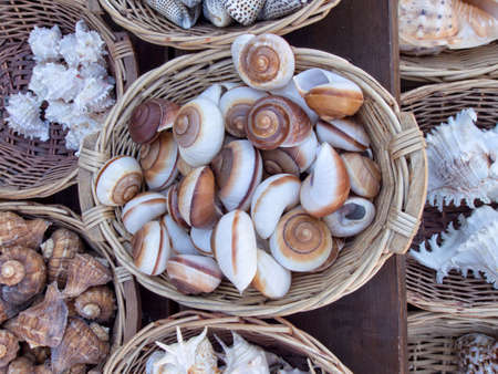 molusk: Basket full of colorful snail shells