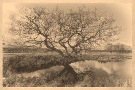 gnarled: Calotype imagen de un �rbol retorcido de edad por un estanque