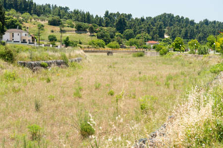 waterless: Waterless river bed overgrown with grass