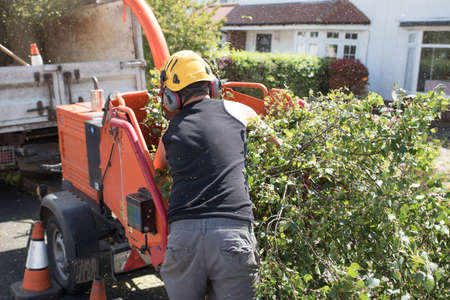 Male operative loading branches into an industrial wood chipping machine Stockfoto - 105503096