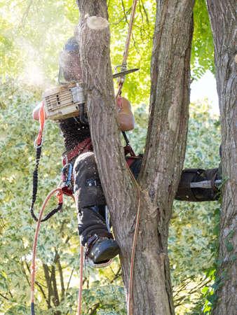 Female Arborist working up a tree hidden by sawdust