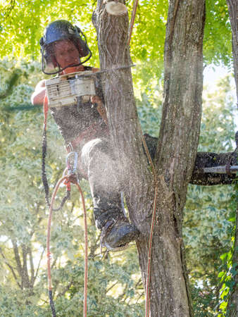 Female Arborist using a chainsaw up a tree is showered with sawdust