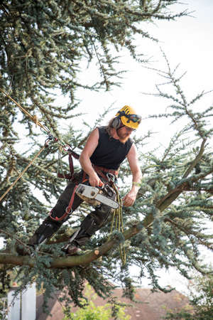 Male Tree Surgeon using a chainsaw roped to a tree.