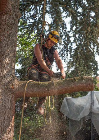 Male Tree Surgeon using a chainsaw while sat on a branch. Stok Fotoğraf