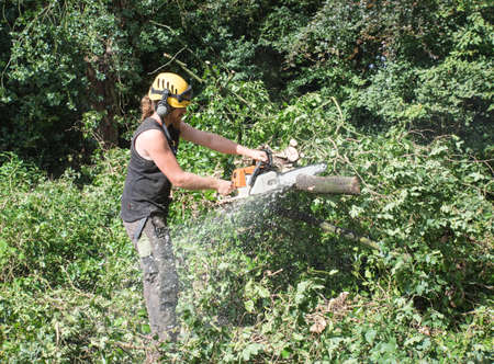 Male Tree Surgeon using a chainsaw cuts branches of a fallen tree.