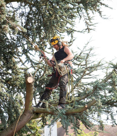 Male Tree Surgeon using a chainsaw standing on a tree branch Stok Fotoğraf