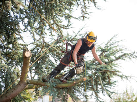 Male Tree Surgeon using a chainsaw leaning to cut a branch Stok Fotoğraf