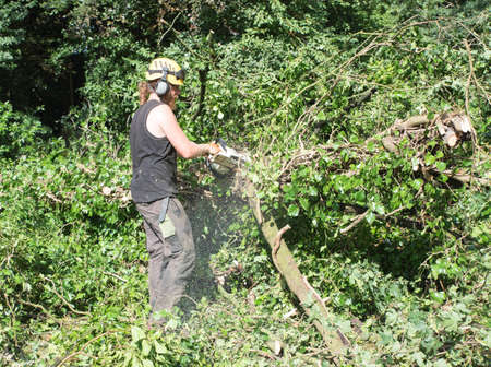 Male Tree Surgeon using a chainsaw