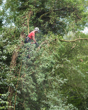Male Tree Surgeon using a chainsaw high up in a tree.
