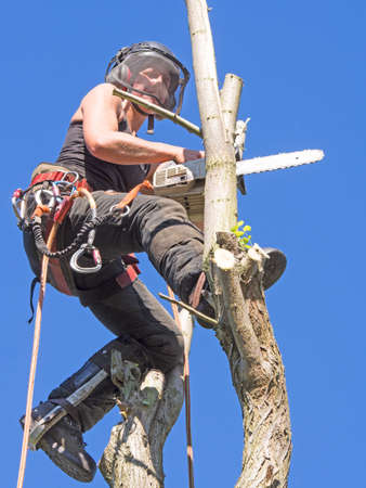 Female Arborist working in the tree top. Stok Fotoğraf
