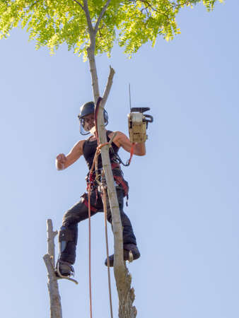 Female tree surgeon balances on top of a tree with a chainsaw.