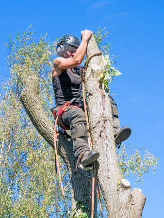 Female Arborist adjusts her saftey rope at the top of a tree. Stok Fotoğraf