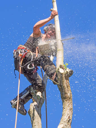 Female Arborist using a chainsaw at the top of a thin tree.