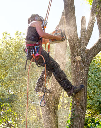 Female Tree Surgeon covered with Sawdust while cutting a branch of a tree. Stok Fotoğraf