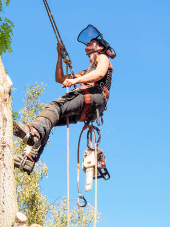 Female Tree Surgeon checking her safety ropes up a tree. Stok Fotoğraf