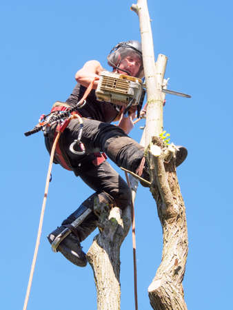 Female tree surgeon cutting branches at the top of a tree.