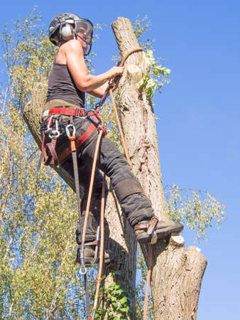 Female tree surgeon adjusting her safety ropes up a tree.