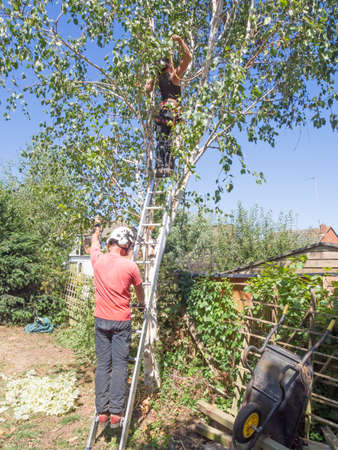 Male tree surgeon holds a ladder for a female Arborist working up a tree.
