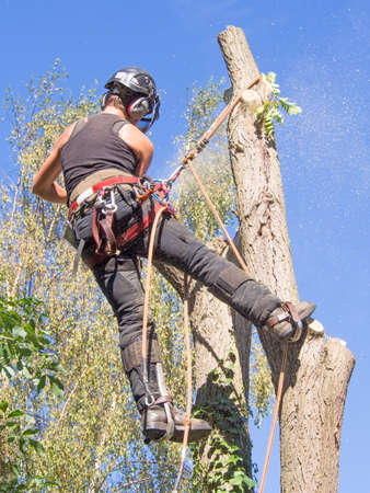Female tree surgeon using a chainsaw at a tree top.