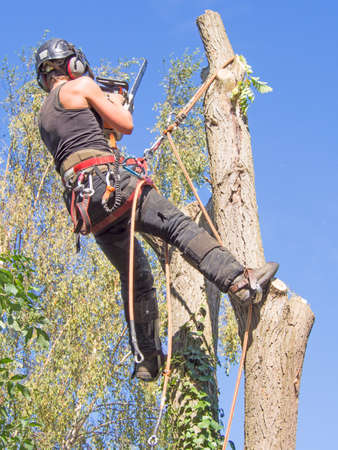 Female tree surgeon working at the top of a tree with a chainsaw.