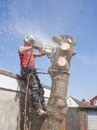 Male tree surgeon reducing the height of a tree trunk with a chainsaw. Stok Fotoğraf