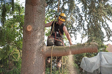 Arborist at work cutting a tree branch using a chainsaw. Stok Fotoğraf