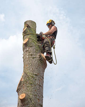 Tree Surgeon using a chainsaw while roped to the top of a tree.