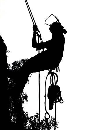 Cirujano de árboles femenino comprobando sus cuerdas de seguridad en un árbol El arbolista lleva una motosierra. Ilustración de vector