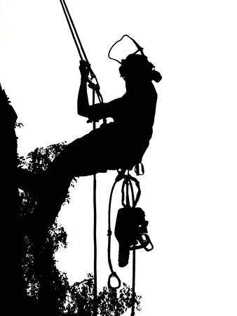 Female Tree Surgeon checking her safety ropes up a tree. The Arborist is carrying a chainsaw. Ilustracja