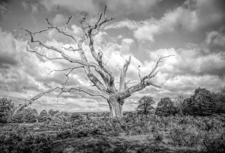 Black and White image of a Lone Dead Tree standing in the countryside. Stok Fotoğraf