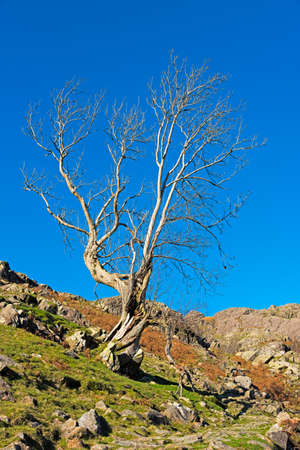 Lone tree on a rocky hillside in the Lake District in the UK.