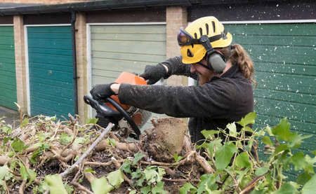An Arborist or tree surgeon uses a chainsaw on a tree.The tree Surgeon is wearing chainsaw safety equipment. Motion blur of the sawdust and chippings.