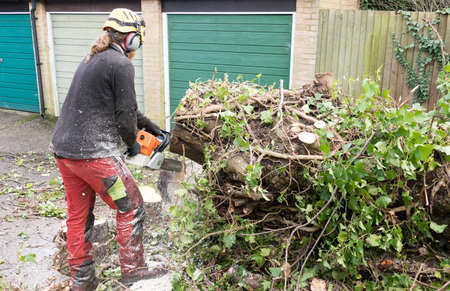 Arborist or tree surgeon using a chainsaw on ivy covered tree.The tree Surgeon is wearing chainsaw safety equipment. Motion blur of the sawdust and chippings.