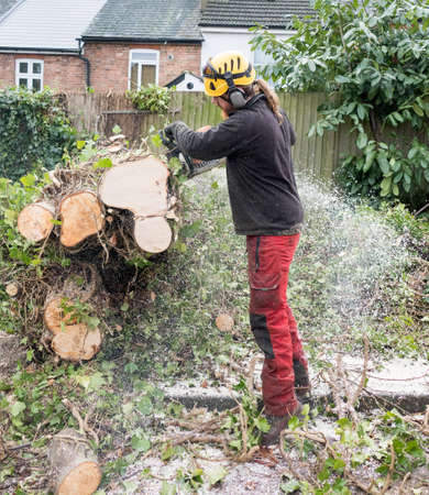Working Tree Surgeon or Arborist using a chainsaw to cut up a felled tree.The tree Surgeon is wearing chainsaw safety equipment.Motion blur of the sawdust and chippings.