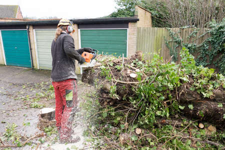 Tree Surgeon or Arborist using a chainsaw on a fallen ivy covered tree.The tree Surgeon is wearing chainsaw safety equipment. Motion blur of the sawdust and chippings. Stok Fotoğraf