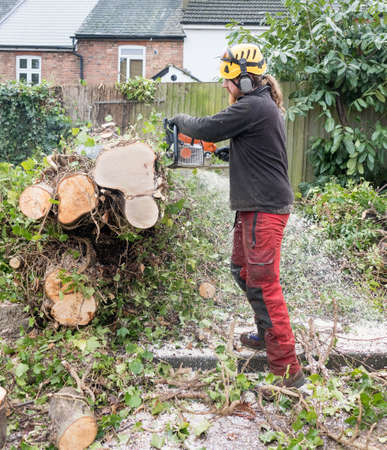 Tree Surgeon or Arborist at work cutting up a felled tree using a chainsaw.The tree Surgeon is wearing chainsaw safety equipment.Motion blur of the sawdust and chippings. Stok Fotoğraf