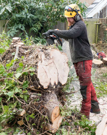 Arborist or Tree Surgeon cutting up a tree using a chainsaw.The tree Surgeon is wearing chainsaw safety equipment. Motion blur of the sawdust and chippings.