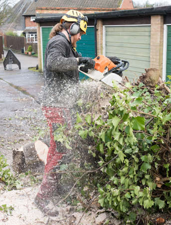 Arborist or Tree Surgeon sawing up a tree covered in sawdust.The tree Surgeon is wearing chainsaw safety equipment. Motion blur of the sawdust and chippings.