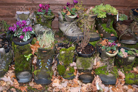 The old boots left behind in the Lake District are being used as flower pots.The Lake District is a World Heritage site in Cumbria,UK
