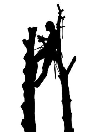 Silhouette of a Tree Surgeon or Arborist roped between two trees Imagens