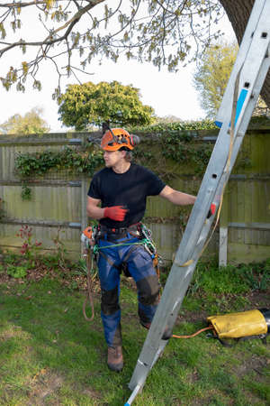 Tree Surgeon or Arborist with safety harness ready to climb a ladder. Imagens